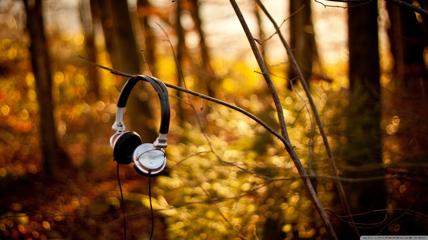 sony headphones on tree wallpaper