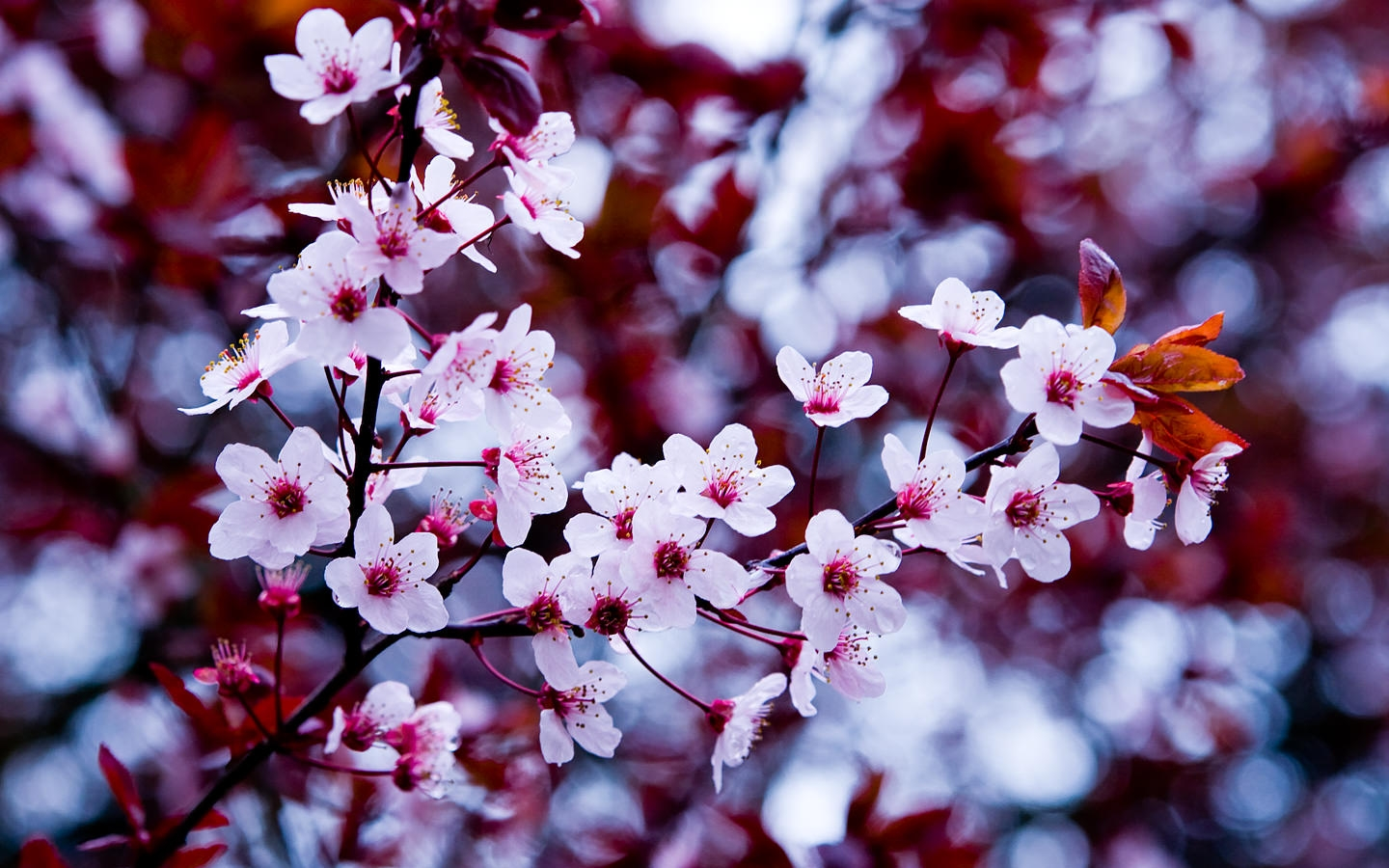 Spring Flowers For Free Download