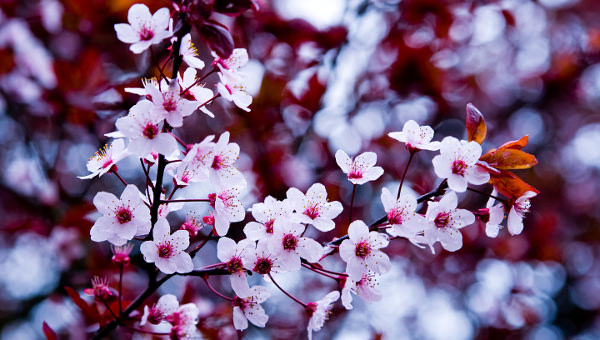 21 spring flower wallpapers flower backgrounds images pictures 21 amazing spring flower wallpapers mightylinksfo