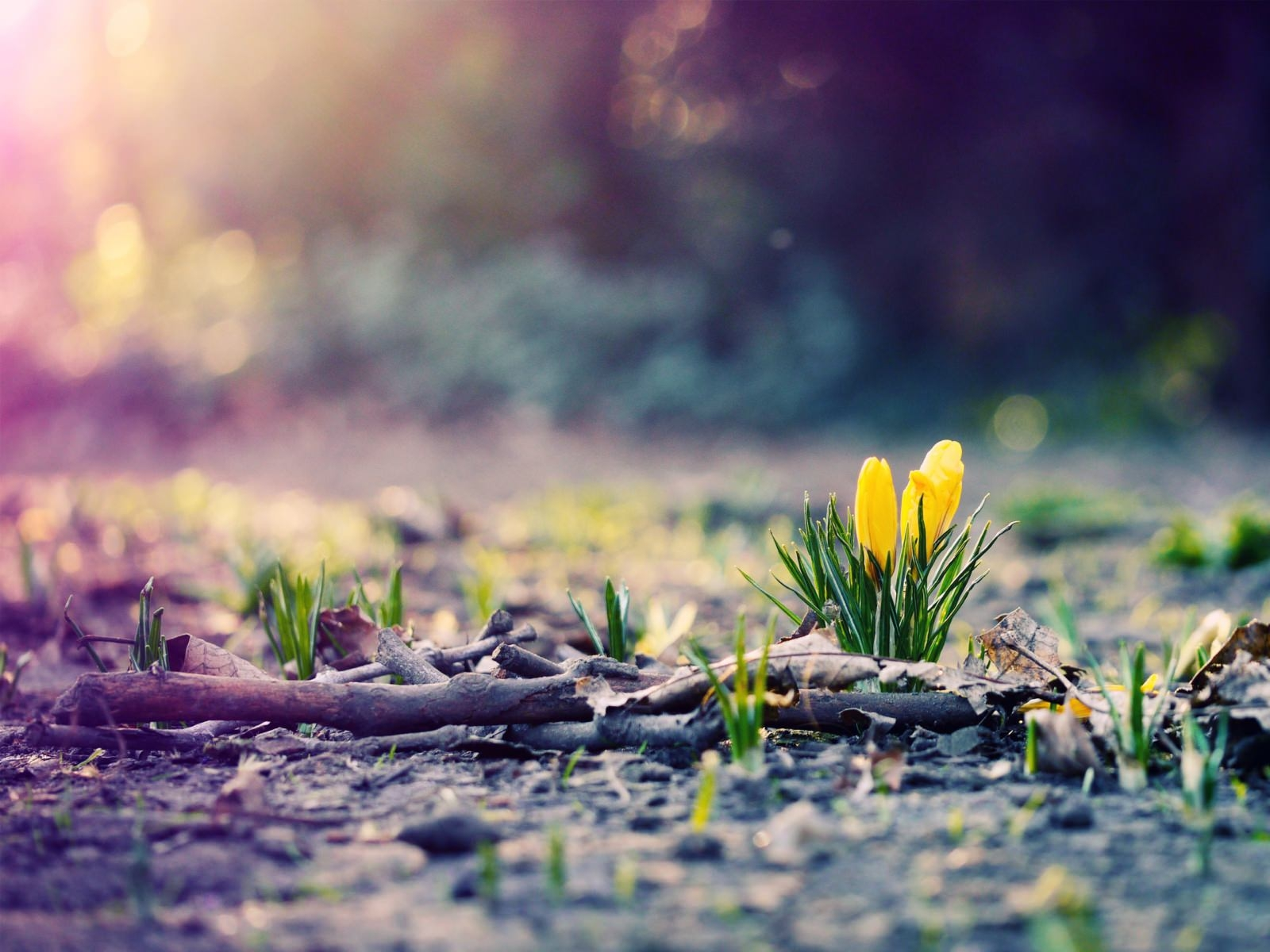 Spring Photography Wallpaper