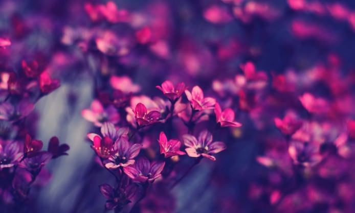 Spring Purple Beauty Photography