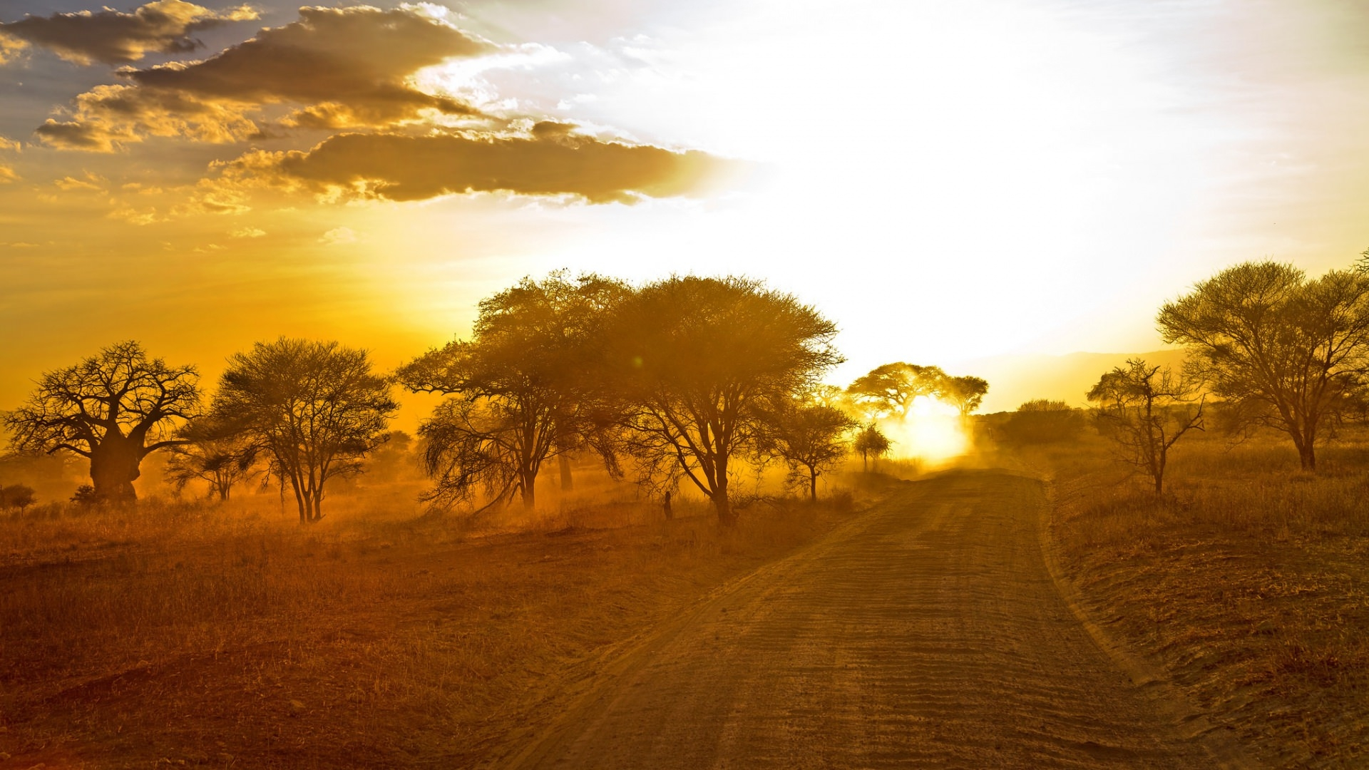 Sunrise in African Forest Wallpaper