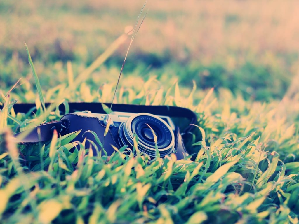 Vintage Camera in Grass Wallpaper