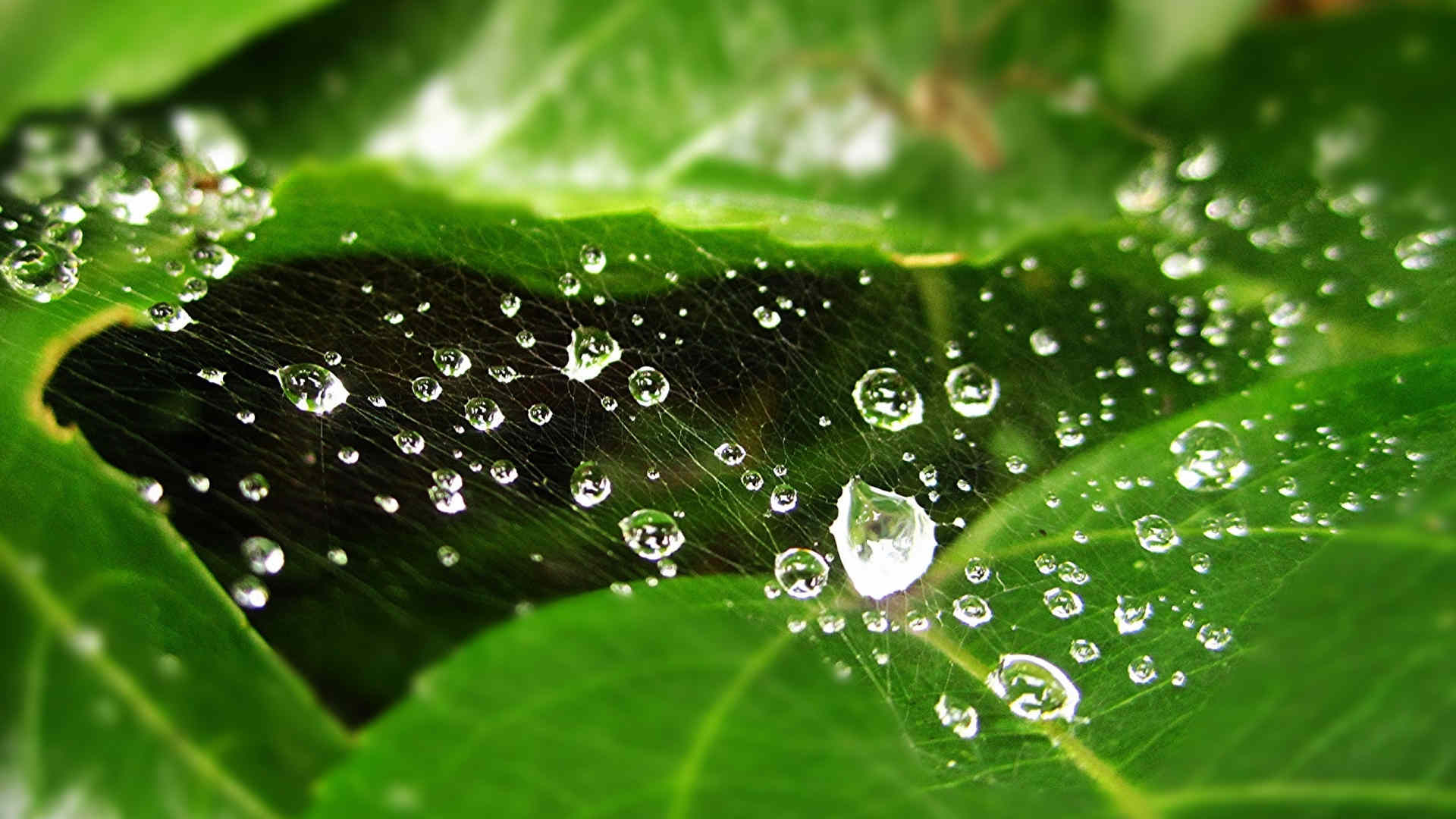 Water Drops On Web Background