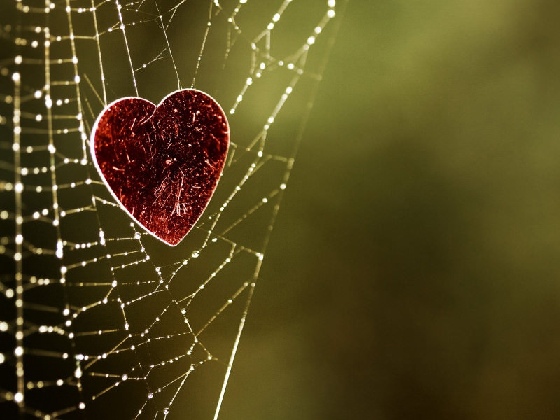 Web Heart Background