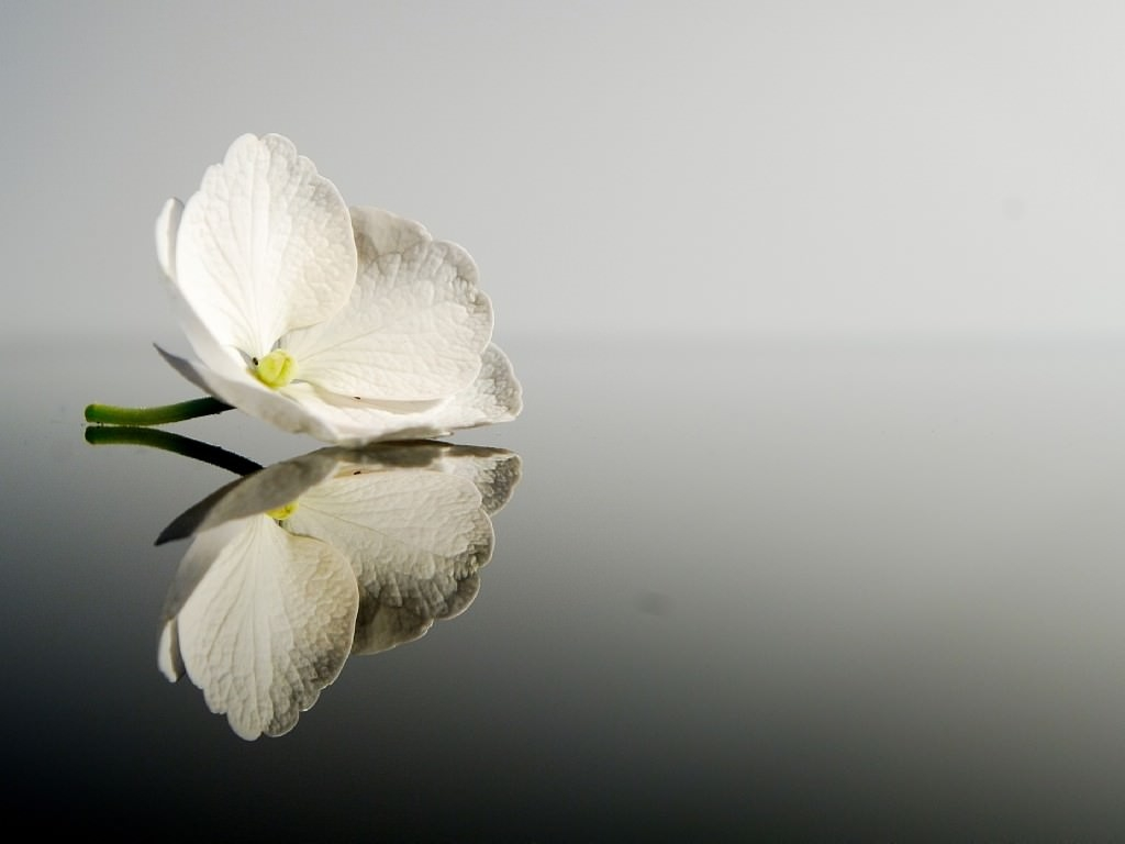 White Beauty Wallpaper