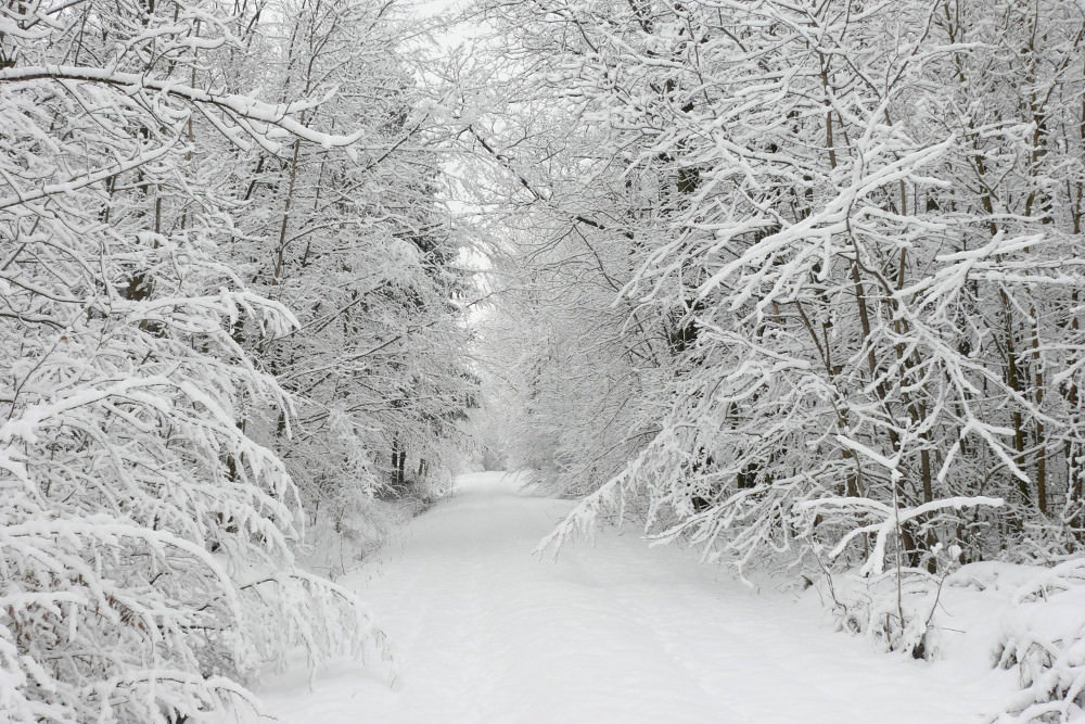 White forest Snow Wallpaper