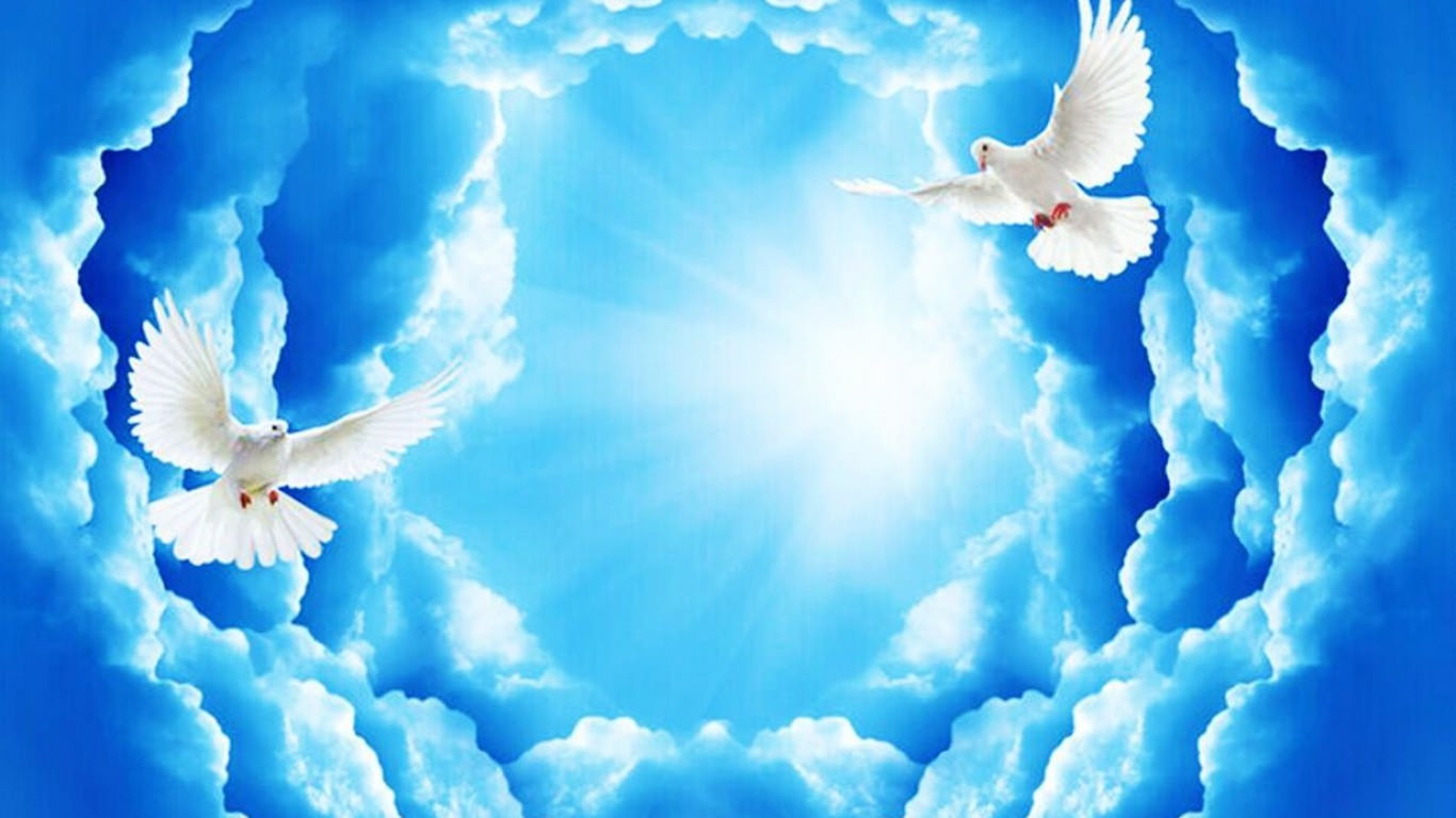 white Doves In Clouds