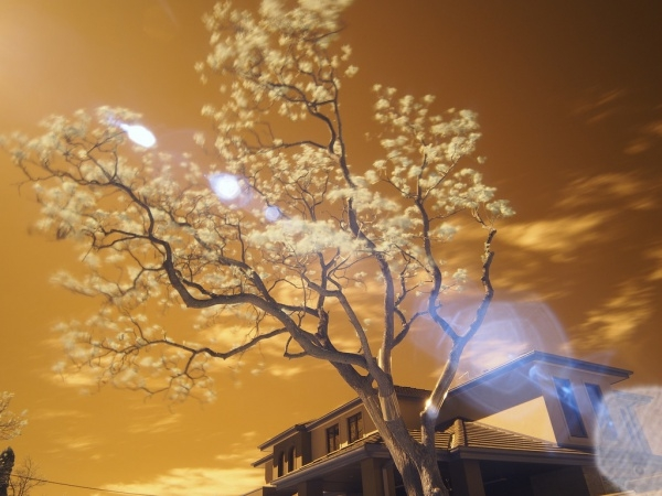 Awesome Infrared Photography