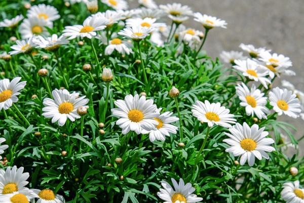 Beatuifull Flowers Photography