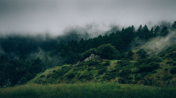 Cloudy Forest Trees Nature Photography