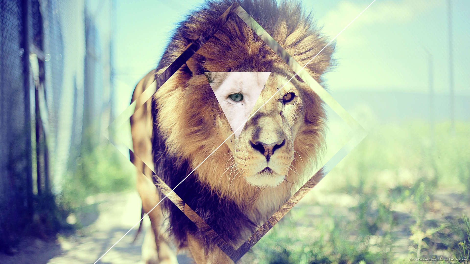 Elegant Hipster Lion Background