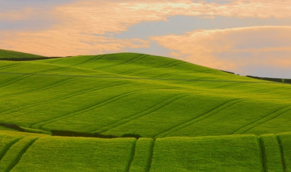Green Wavy Hills wallpaper