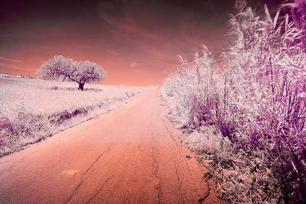 Infrared Outdoor Photography