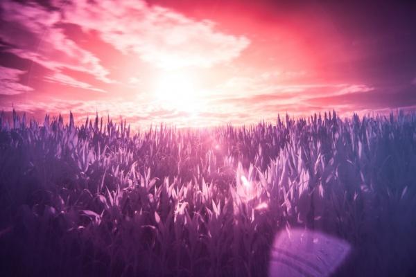 Infrared Sun Rise Photography