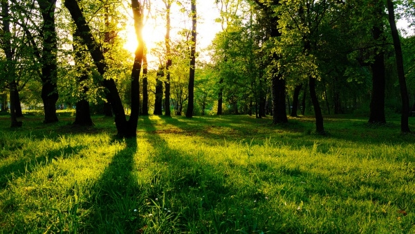 Natural Forest Field Photography