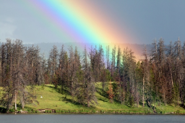 Rainbow Forest Photography