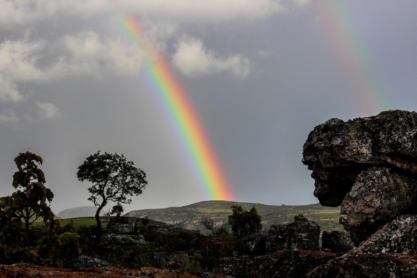 Rainbow Nature Wood Photography