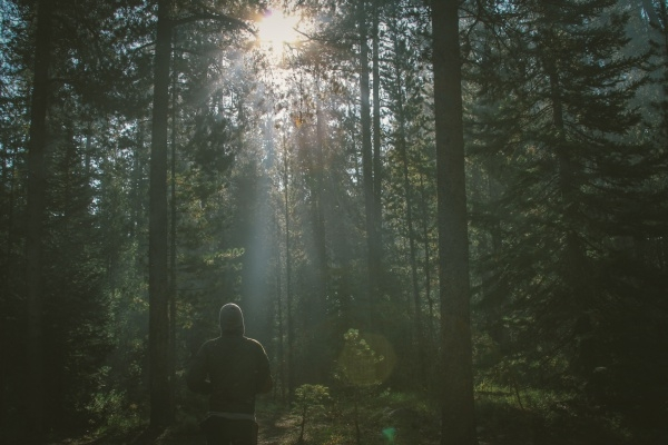 Trees and Sunrise Photography