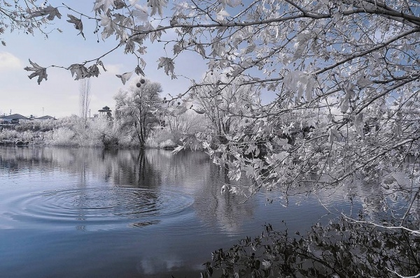 Wonderfull Infrared photography