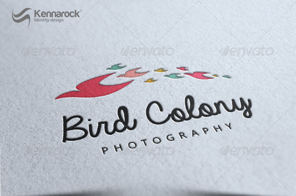 Bird Colony Photography