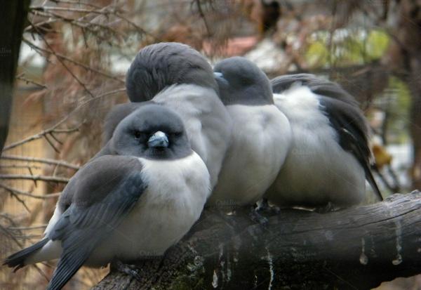 Chubby Love Birds Photography