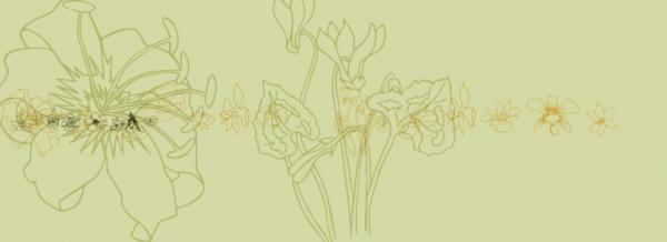 Classy wildflower font