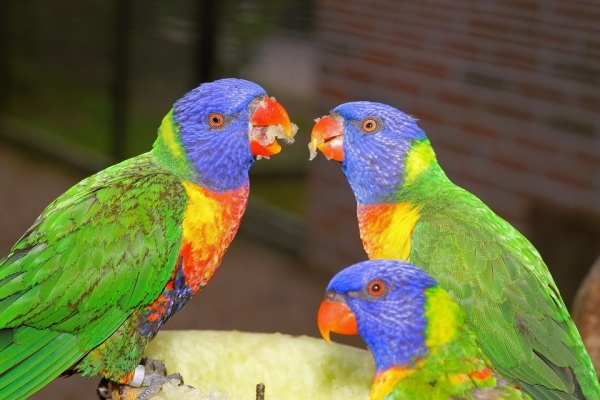 Colorful Parrots Plumage Photography