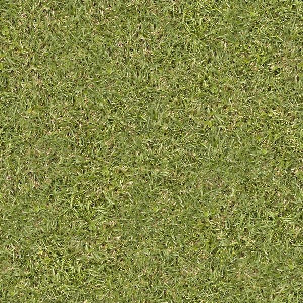 Download Grass texture