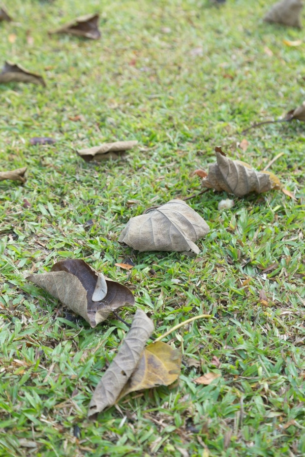 Dry leaves on the lawn Texture