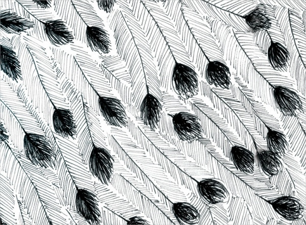 Emu Feather Pattern