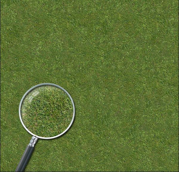 Grass Lawn Hi-Res Texture