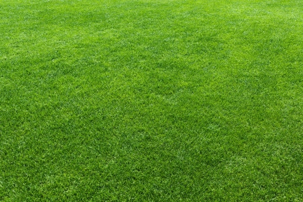 Green lawn background Texture
