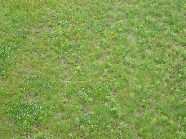 Green lawn dry spots texture