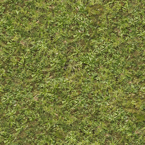 high quality lawn texture tall grass seamless texture49 tall