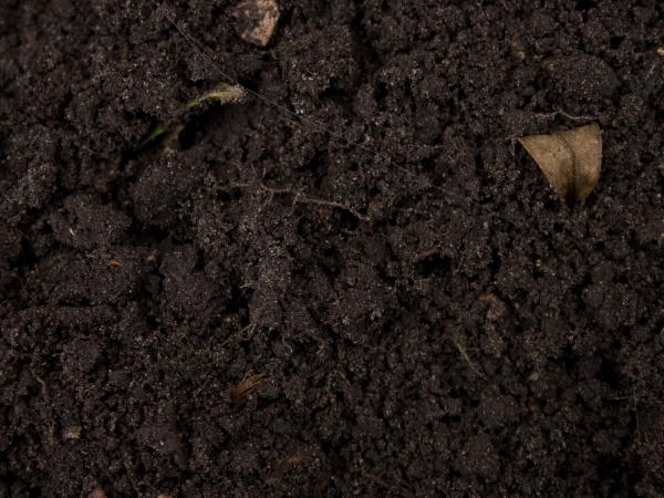 High Resolution Damp soil texture