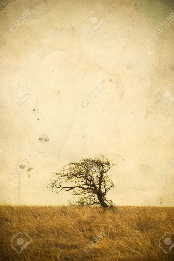 Lonely tree landscape on vintage