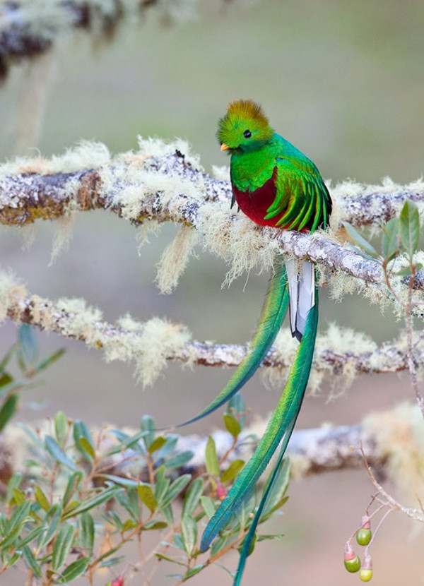 Magic Bird Forest Photography