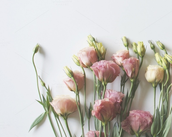 Minimalist Pink Flowers Photography