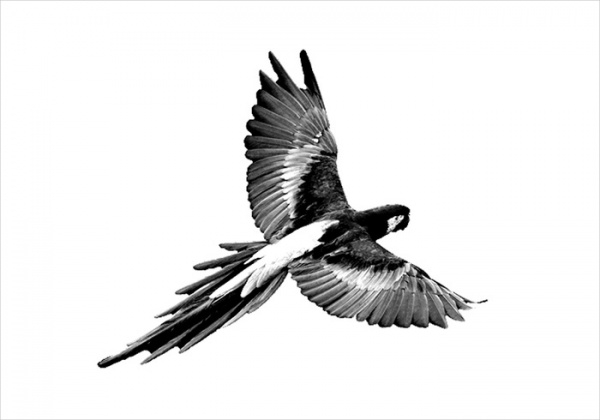 Parrot PSD Vector