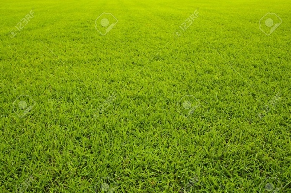 Seamless lawn texture