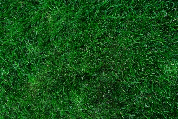 Suburia Green LAwn Texture