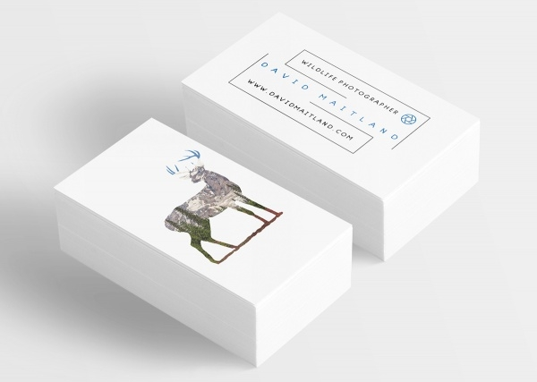 10 photography business card designs freecreatives wildlife photography business card reheart Gallery