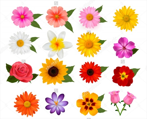 beautiful colorful flowers Vector