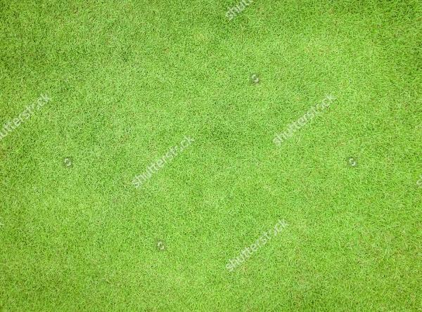 grassy lawn environmental texture
