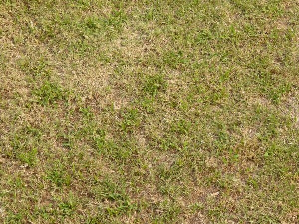 partly-dry LAwn Texture