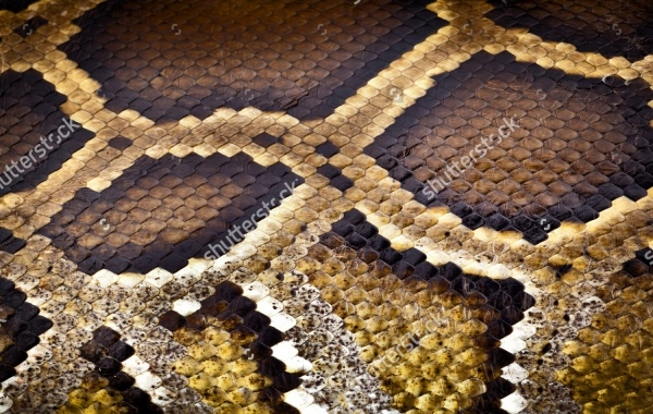 python snake pattern skin