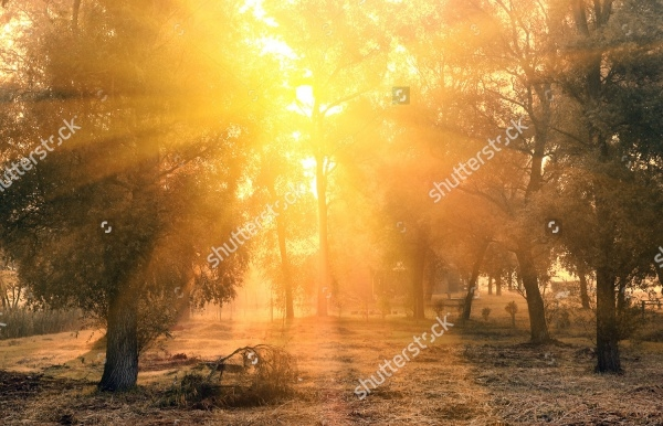Autumn Forest Sunrise Photography