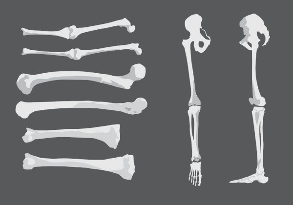 Human Vector Bones & Joints
