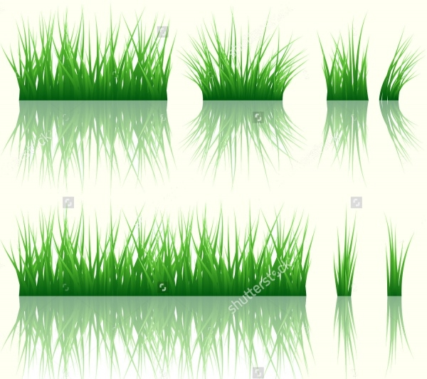 Reflected Green Grass Vector